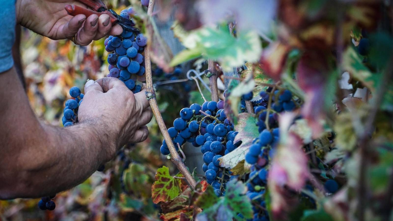 Success Story: Blockchain technology improves wine quality